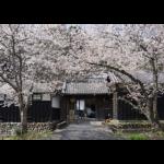 清酒 開運の醸造元、静岡県県掛川市の土井酒造場様を日本酒ポータルサイト「日本酒ツーリズム」に掲載しました。
